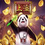 Lucky Panda Shanghai